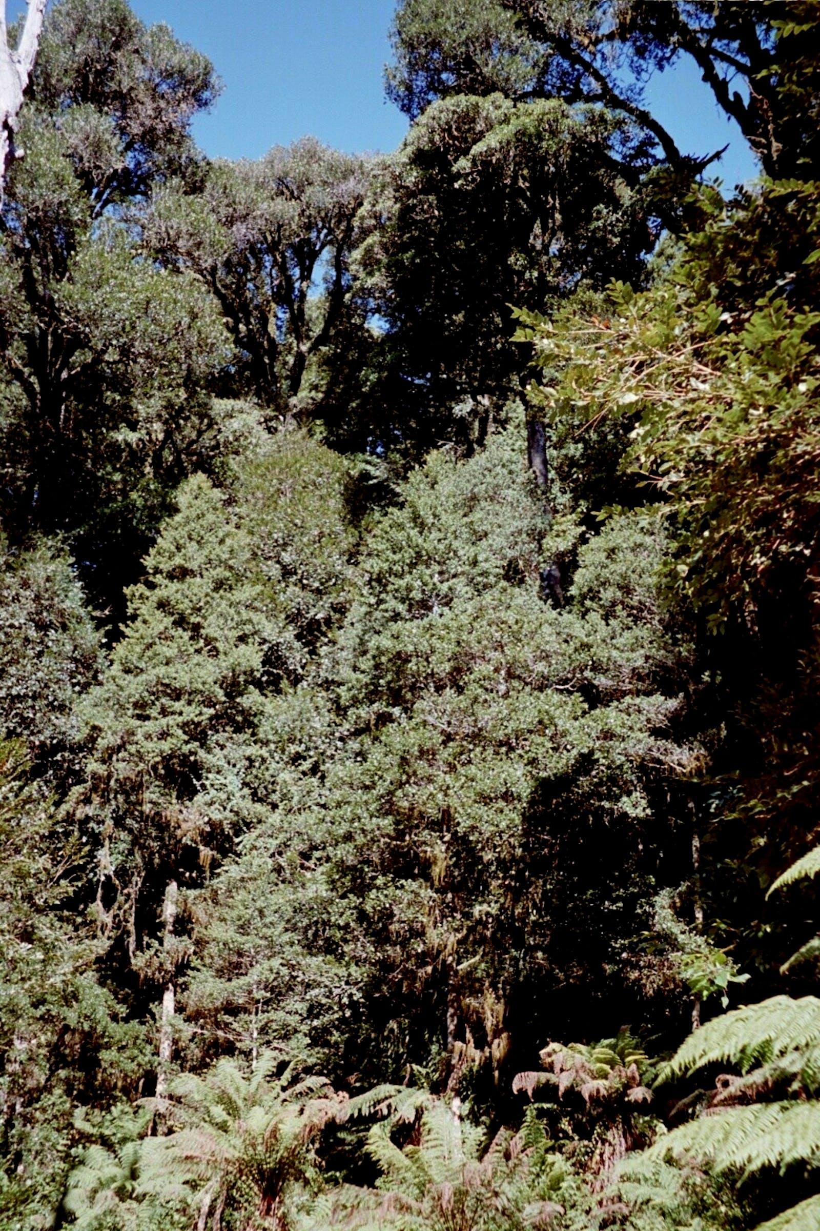 Luzon Rainforests