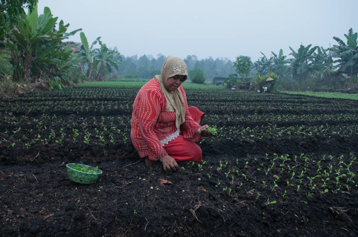 Empowering the Peasant Movement of the Philippines to Secure Land Tenure Rights and Create a Climate-resilient Food System