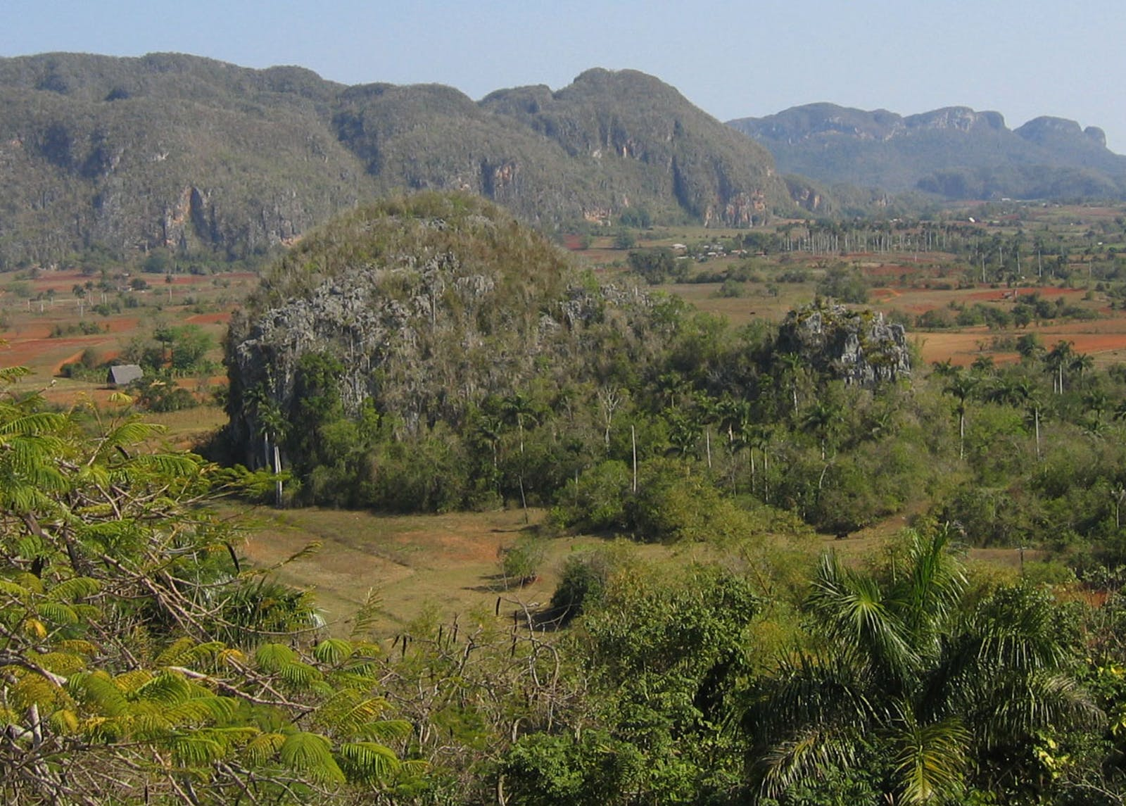 Cuban Dry Forests