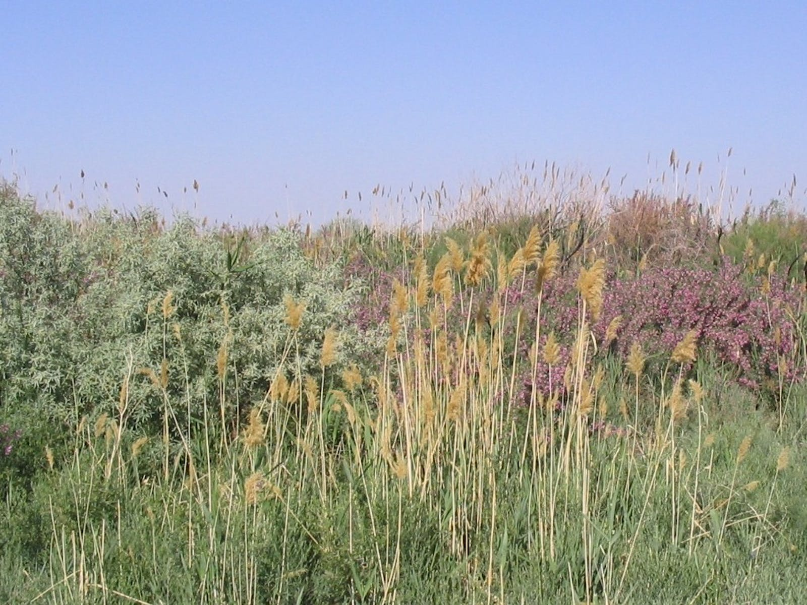 Central Asian Riparian Woodlands