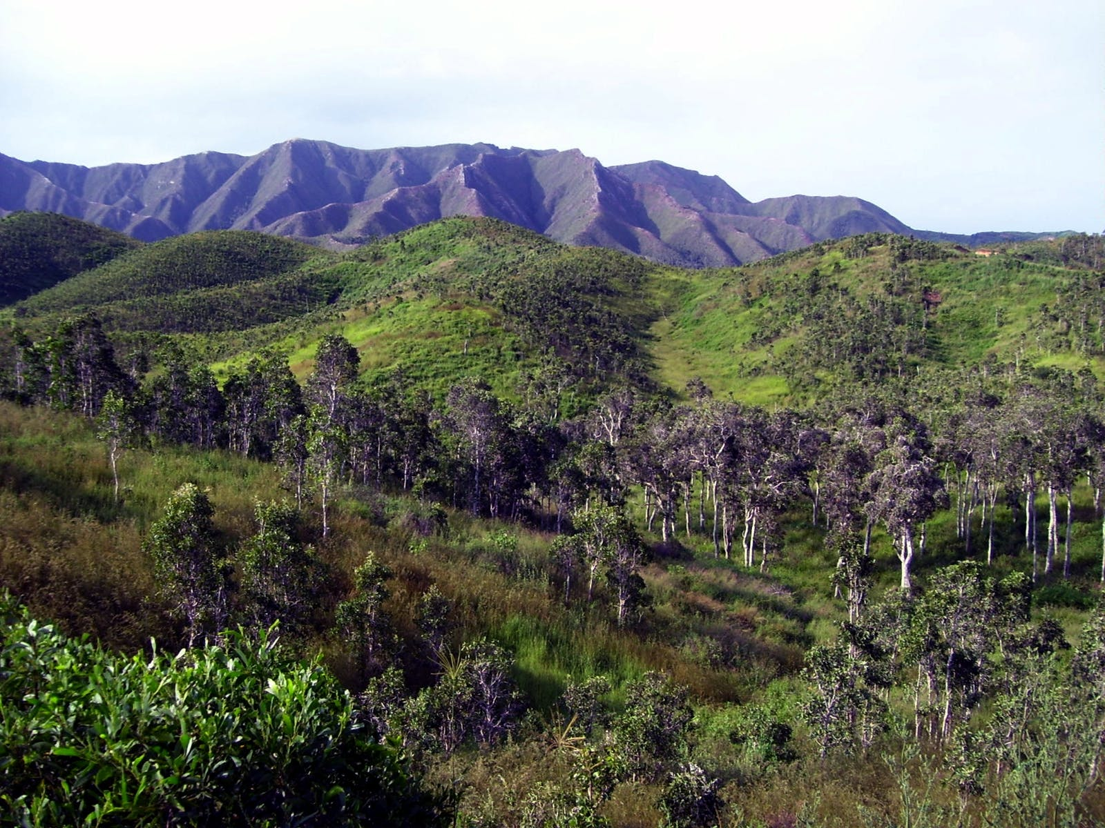 New Caledonia Dry Forests
