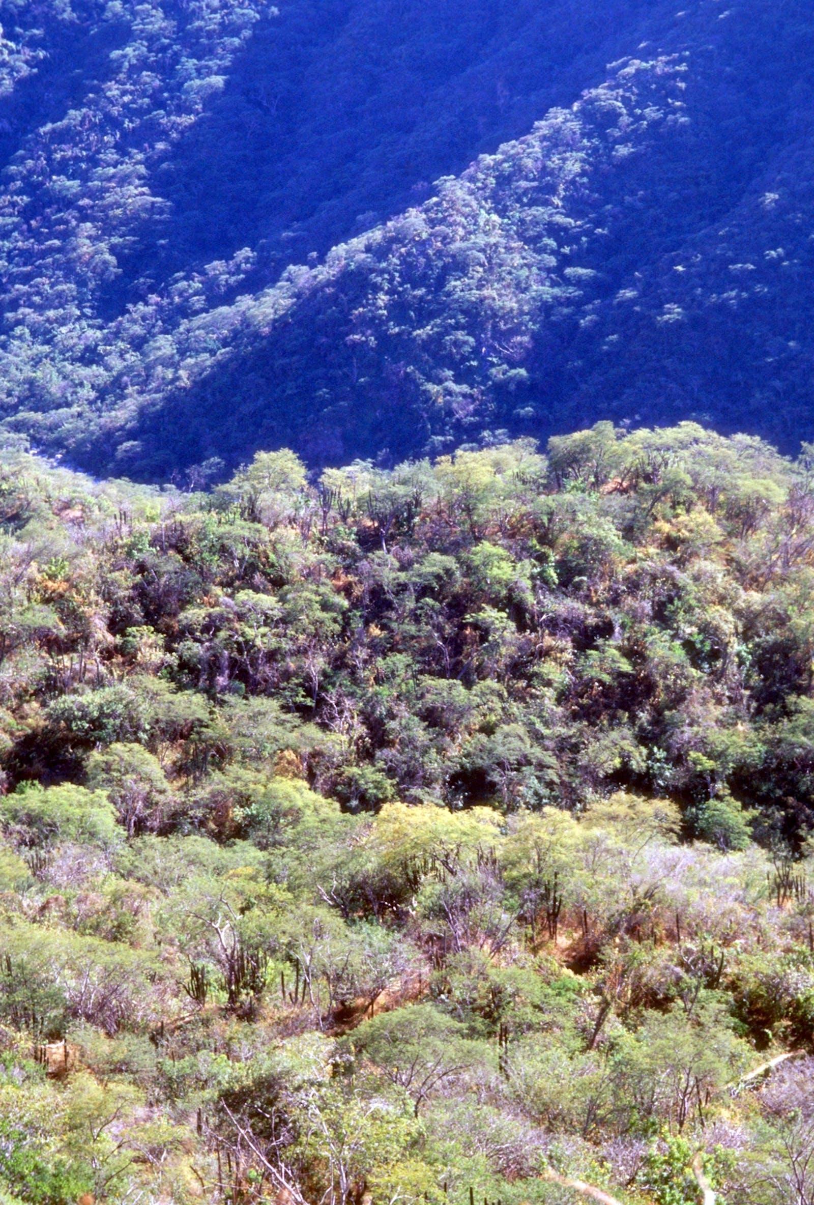 Sierra de la Laguna Dry Forests