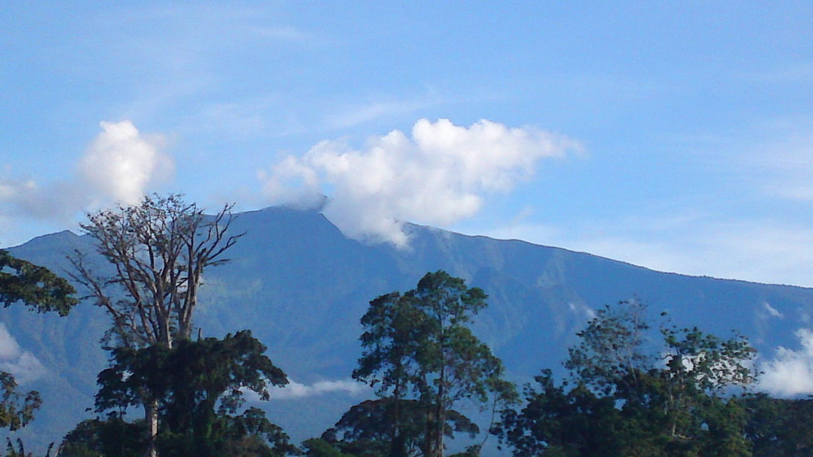 Mount Cameroon and Bioko Montane Forests