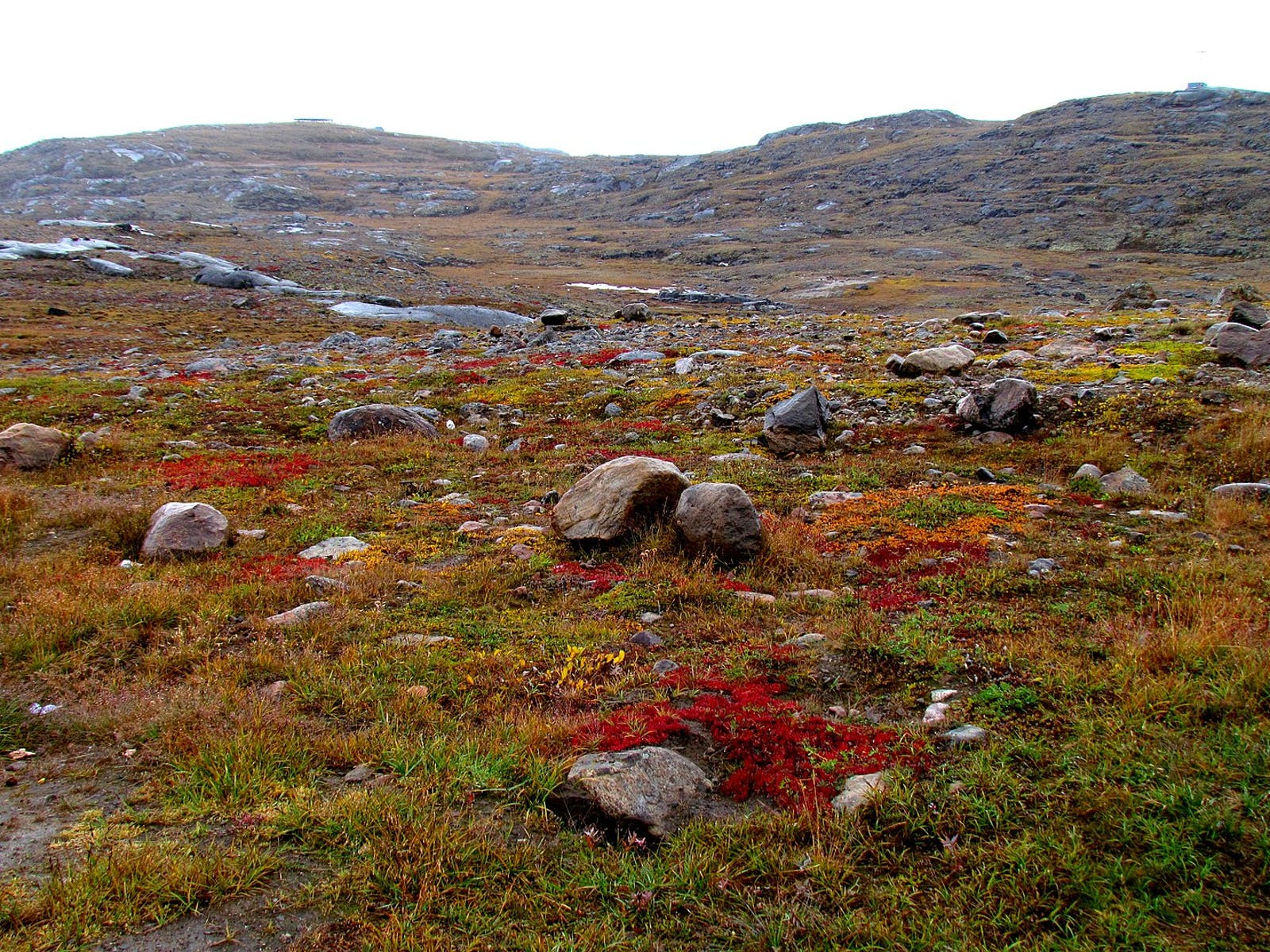 Canadian Middle Arctic Tundra
