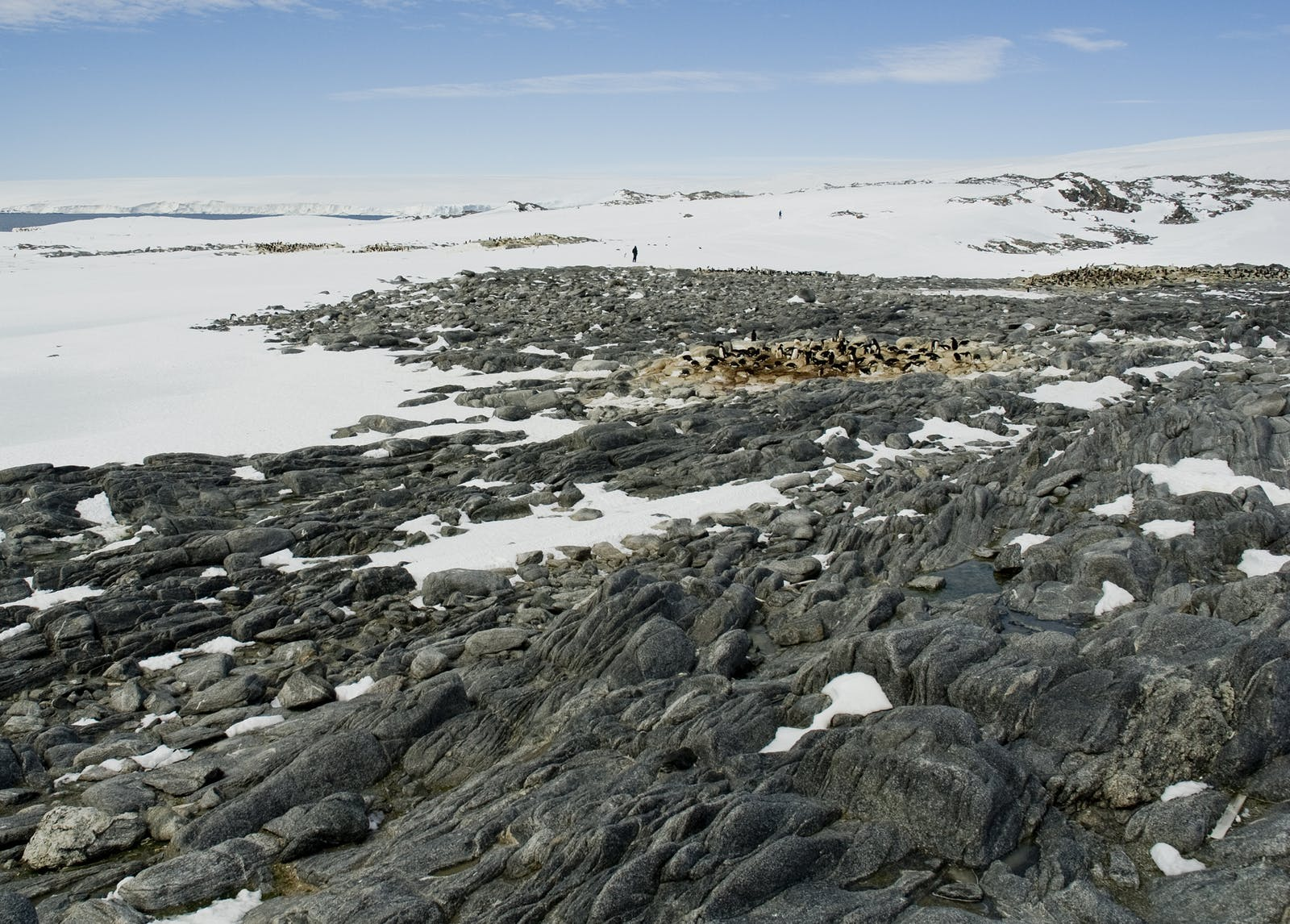 East Antarctic Tundra