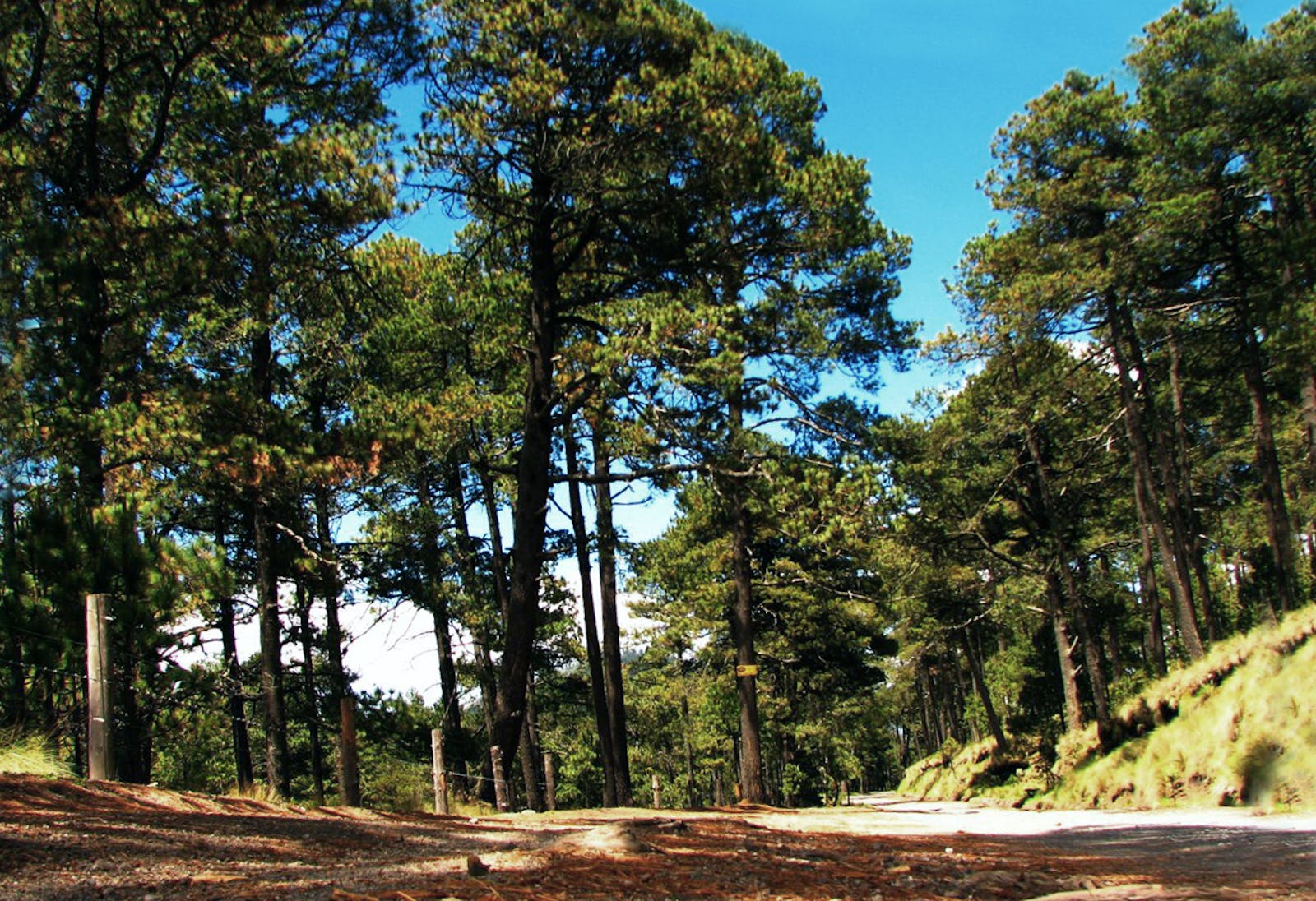Trans-Mexican Volcanic Belt Pine-Oak Forests