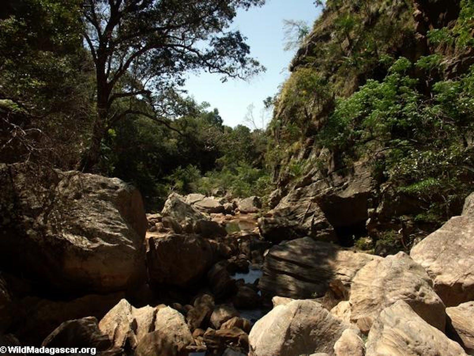 Madagascar Subhumid Forests