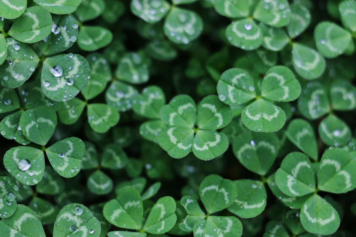 The various advantages of clover