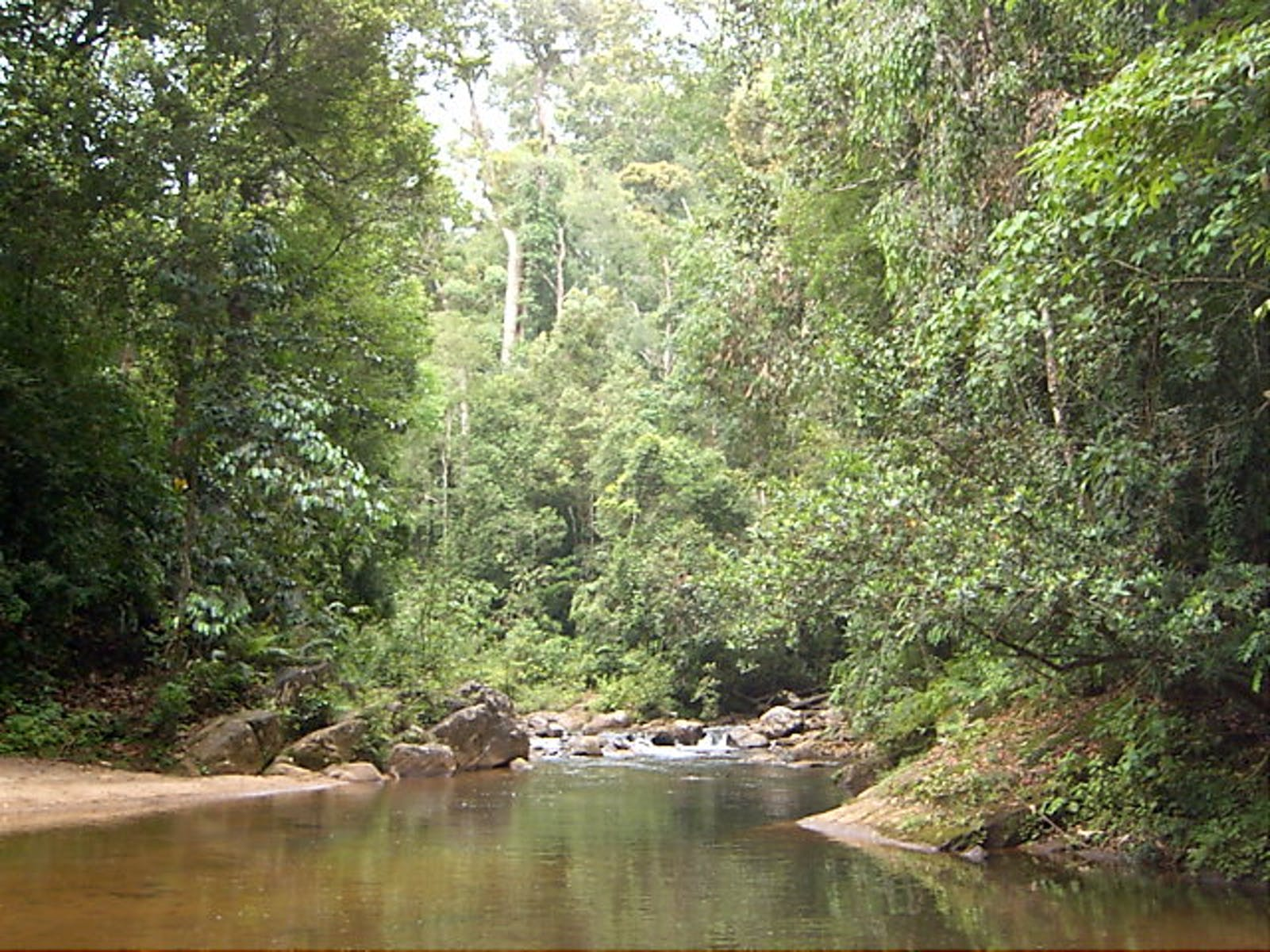 Sri Lanka Lowland Rainforests