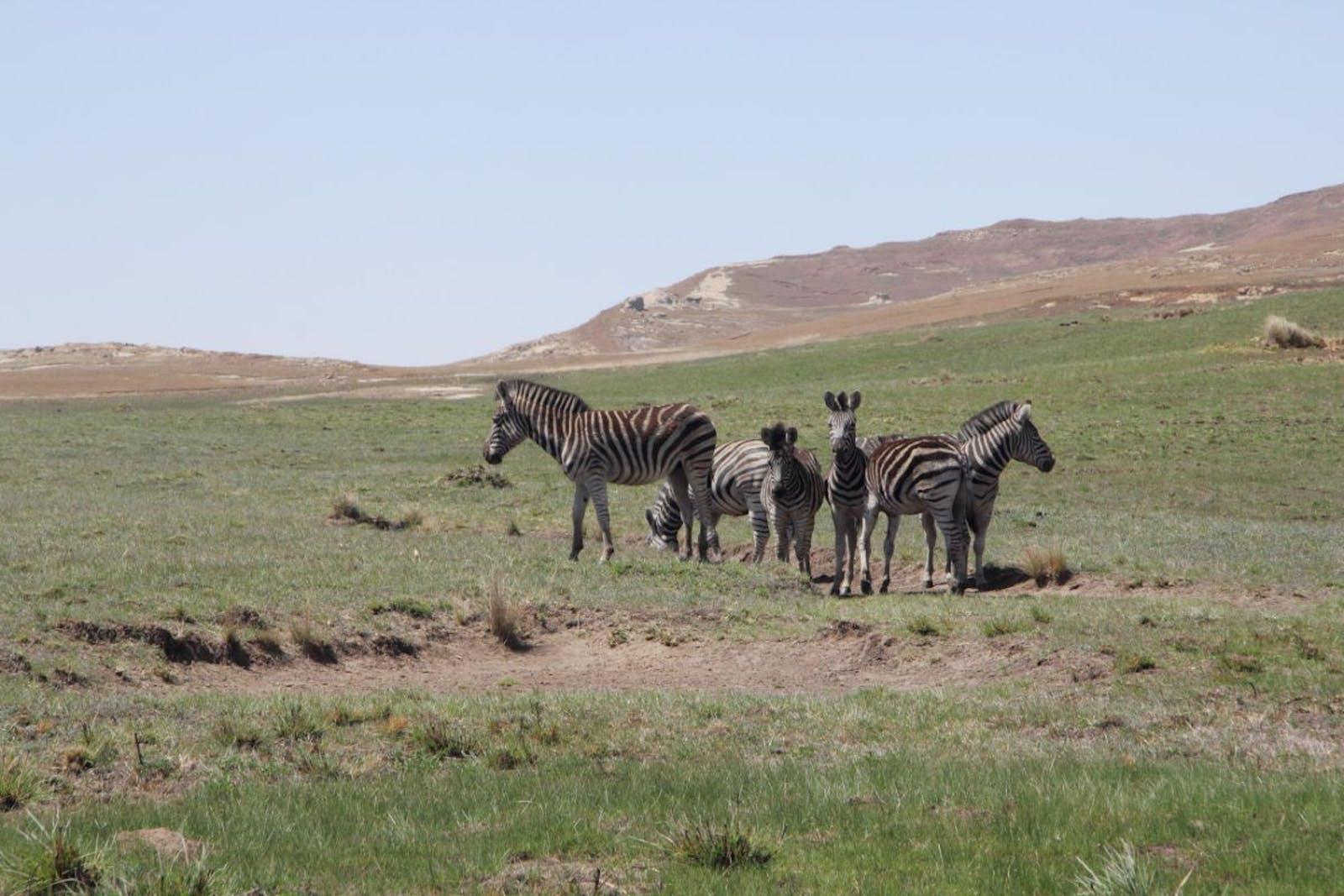 Drakensberg Grasslands