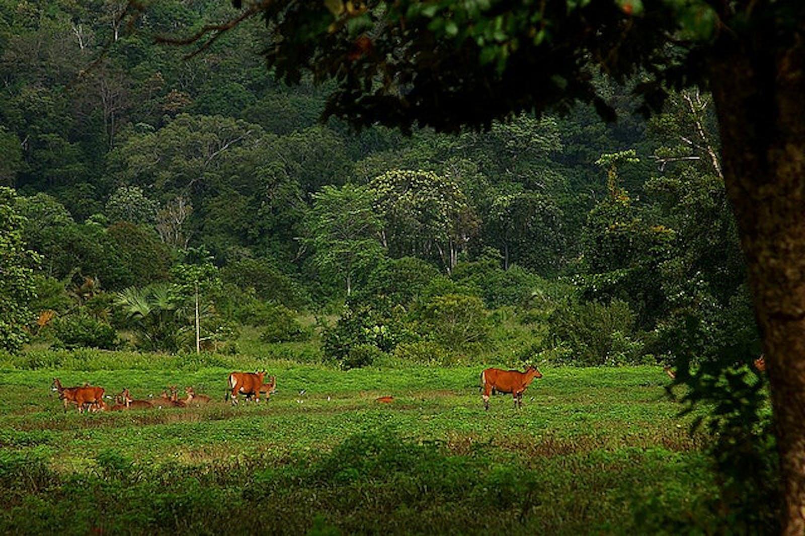 Eastern Java-Bali Rainforests
