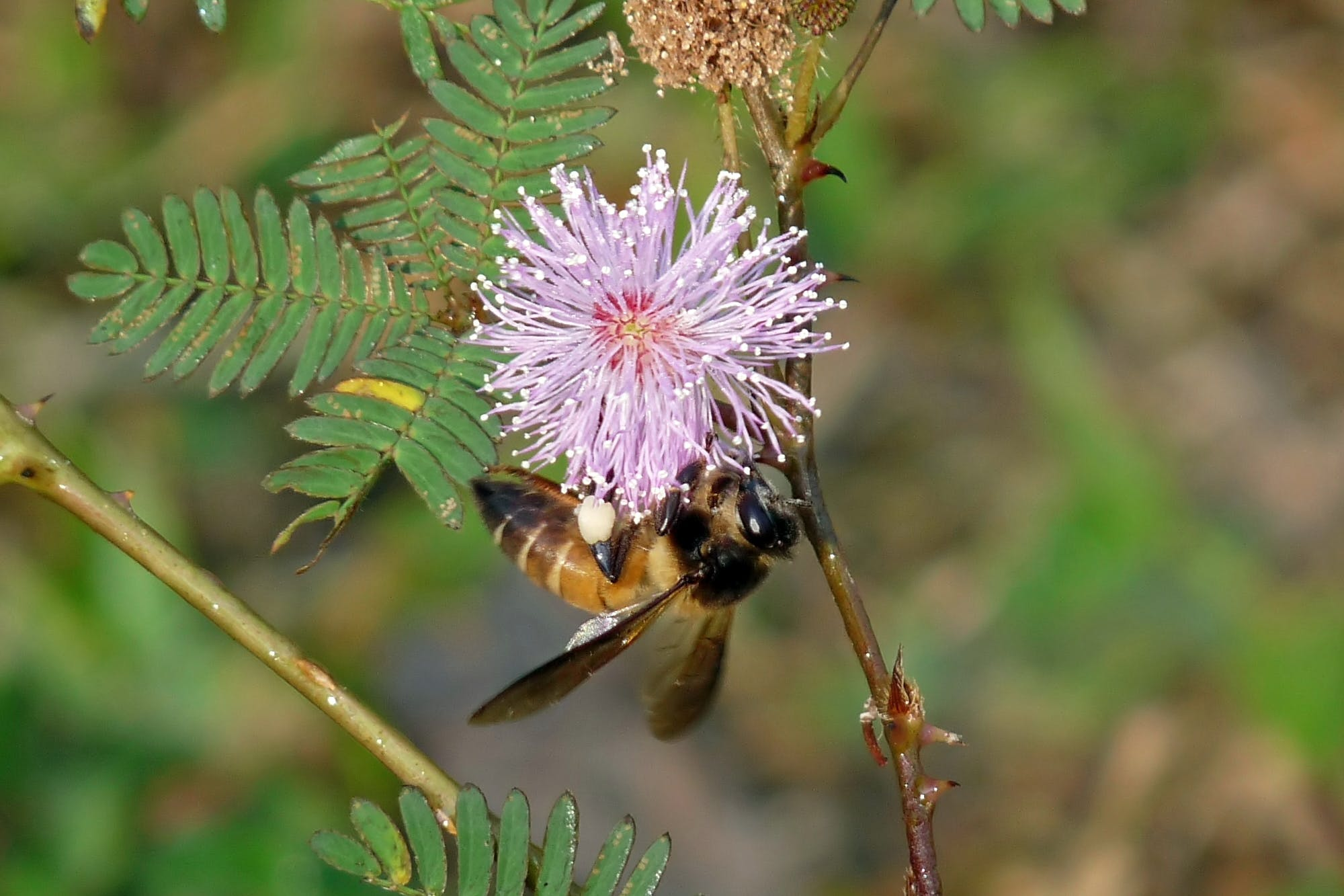 Nearly 90% of wild flowering plants depend on animal pollinators for seed production.