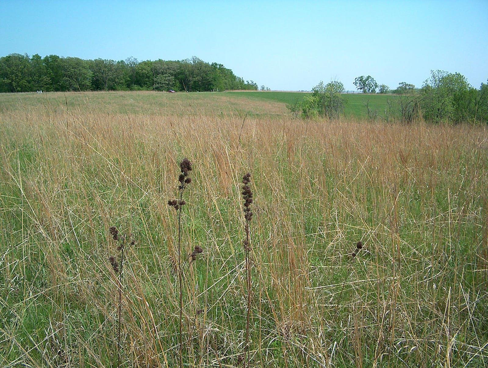 Central Tallgrass Prairie
