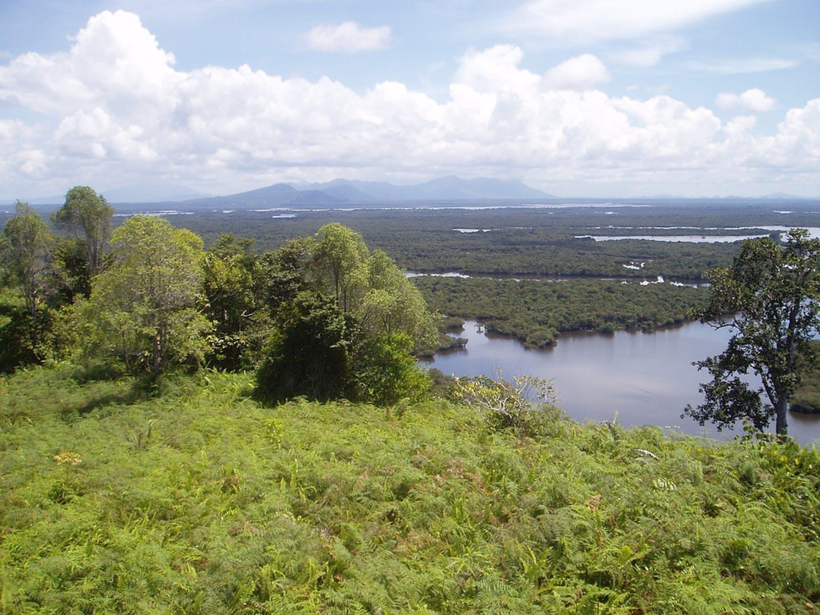 Southwest Borneo Freshwater Swamp Forests