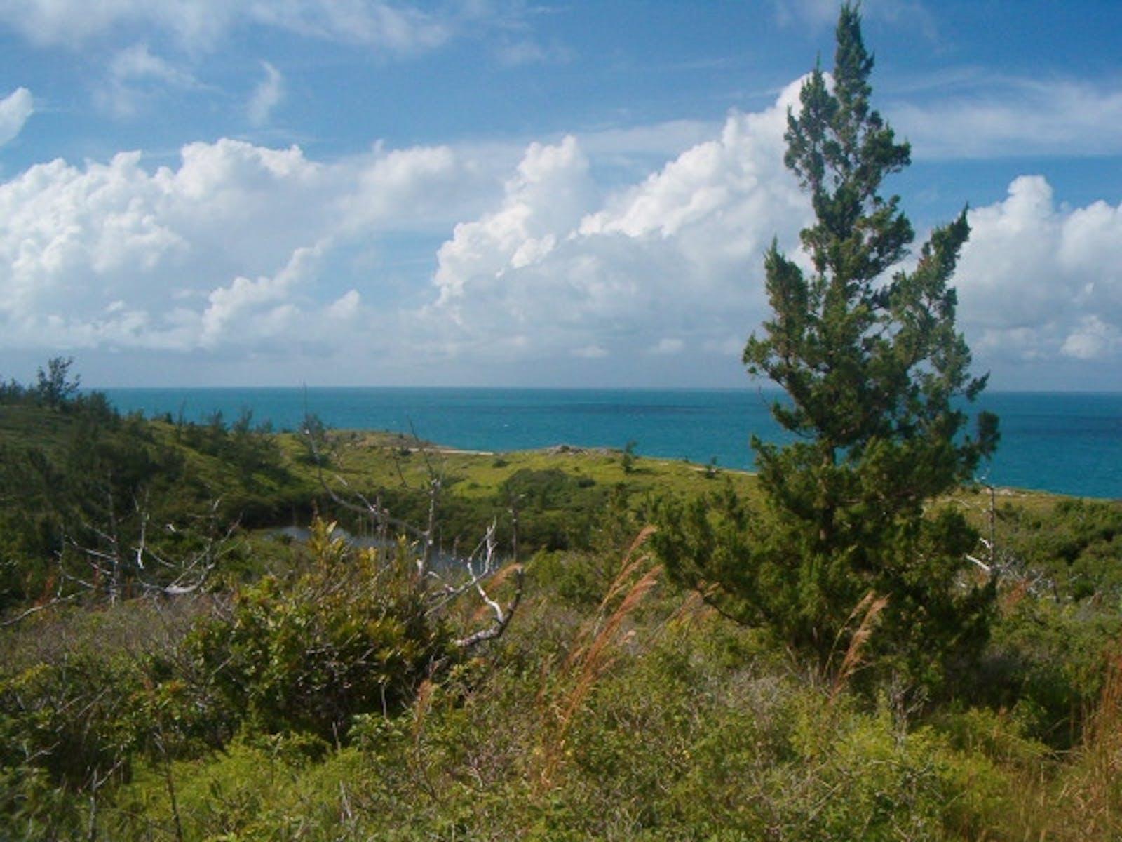 Bermuda Subtropical Conifer Forests