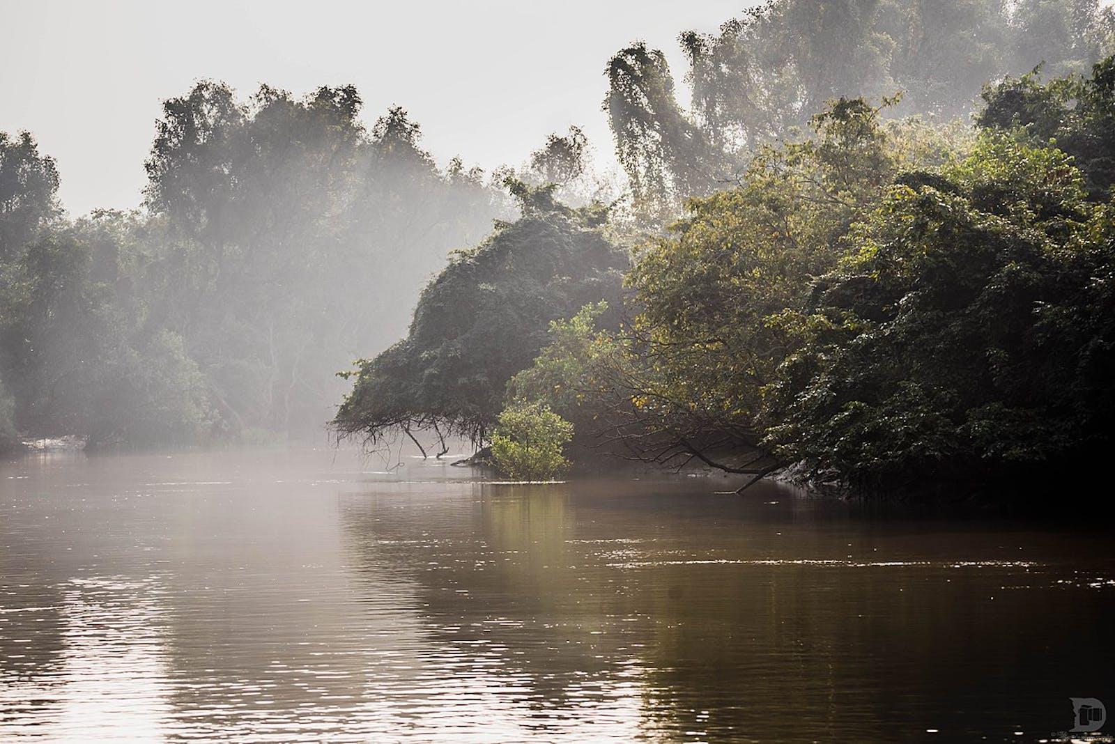 Orissa Semi-Evergreen Forests