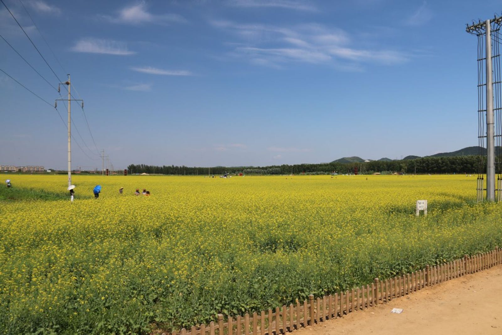 Northeast China Plain Deciduous Forests