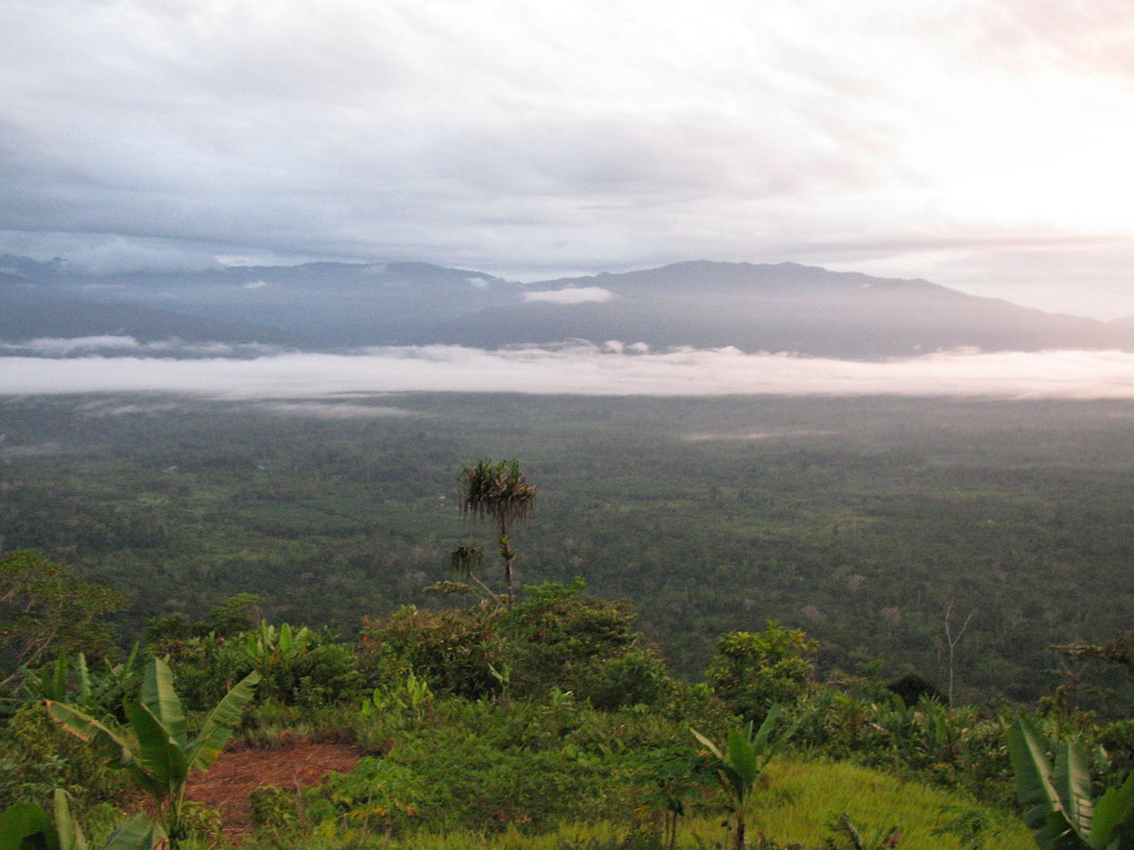 Southeastern Papuan Rainforests