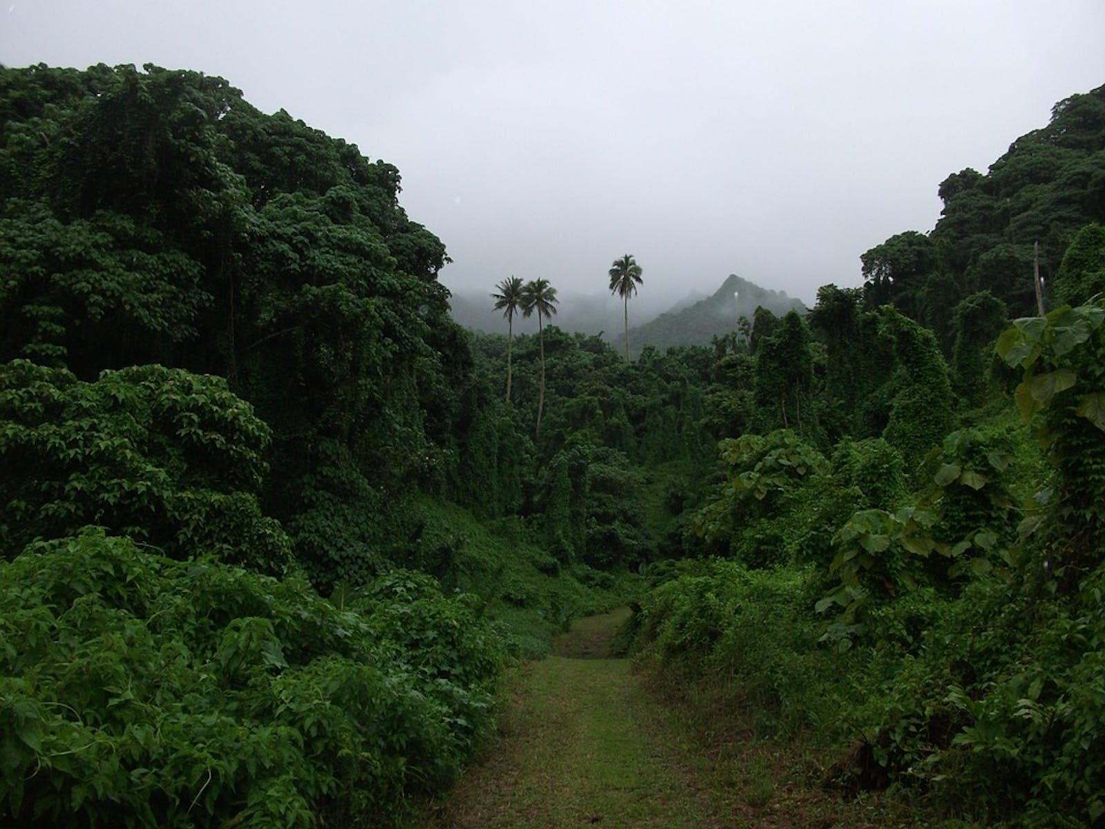 Cook Islands Tropical Moist Forests