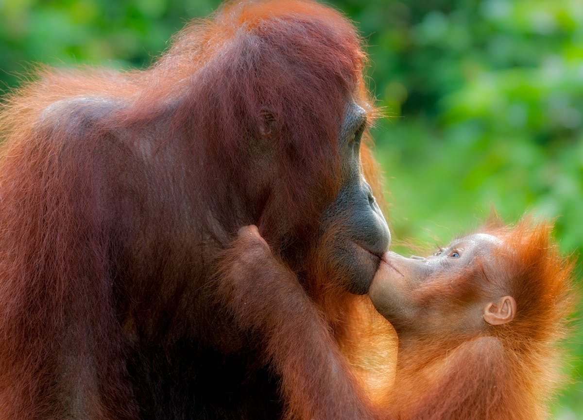A mother's love is crucial for survival