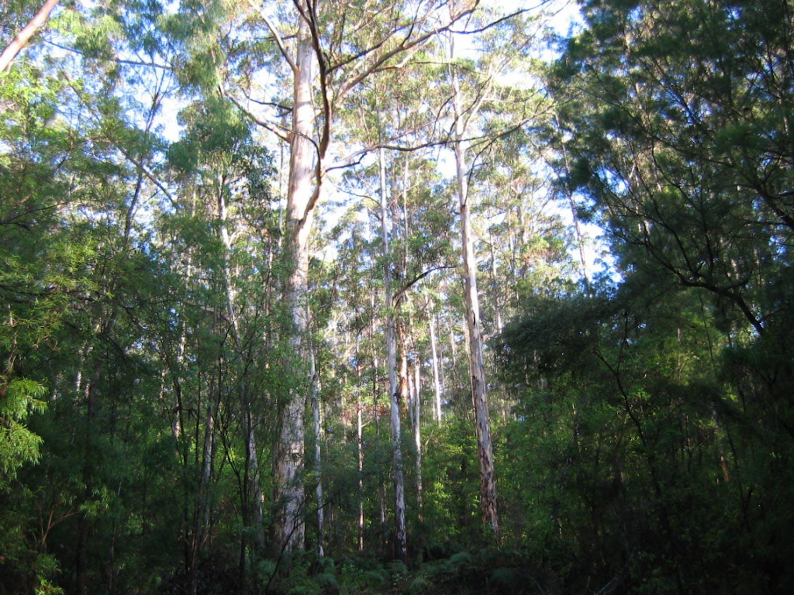 Jarrah-Karri Forest and Shrublands
