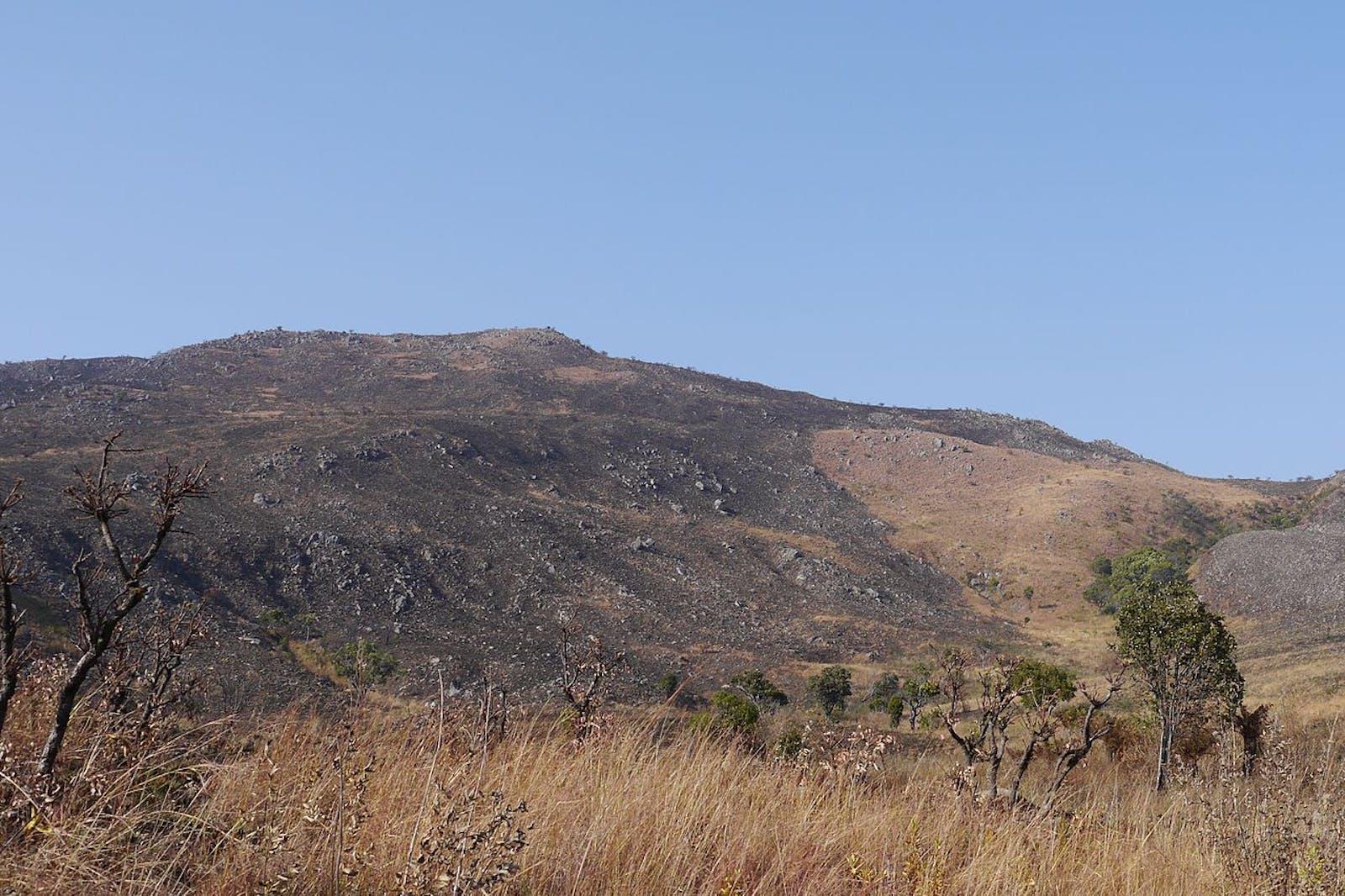 Angolan Montane Forest-Grassland