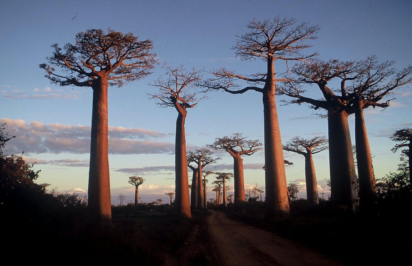 Madagascar Succulent Woodlands
