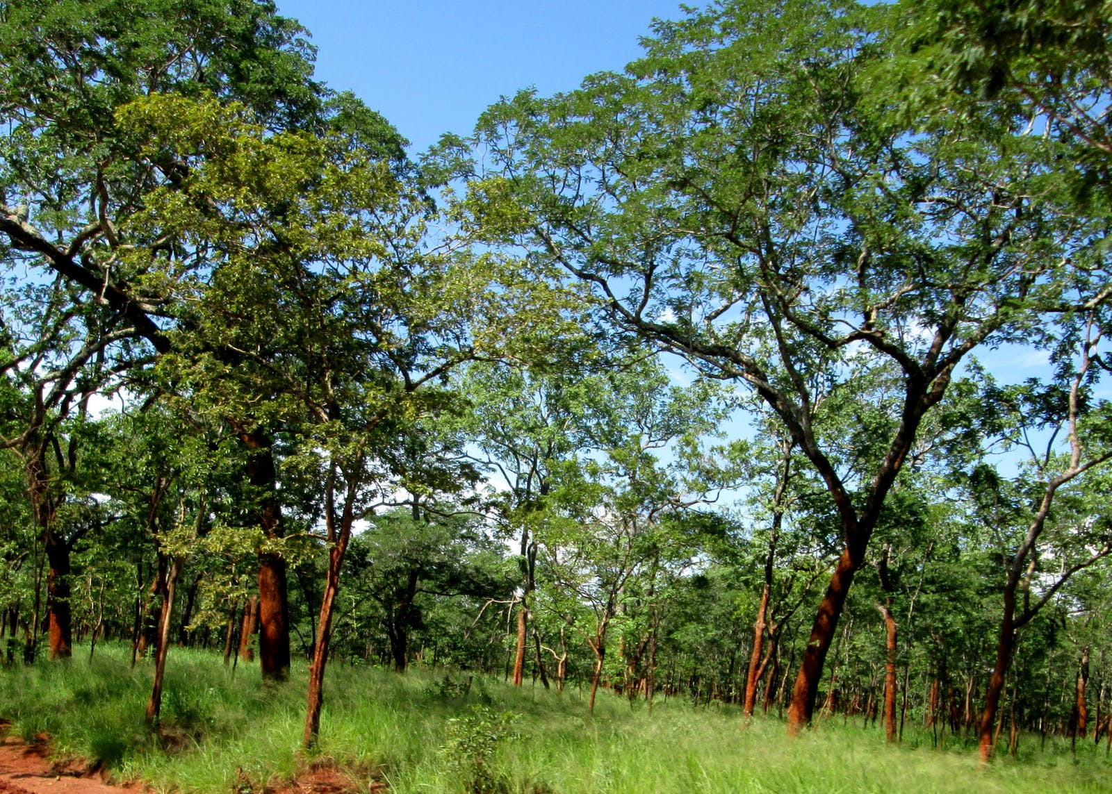 Dry Miombo Woodlands