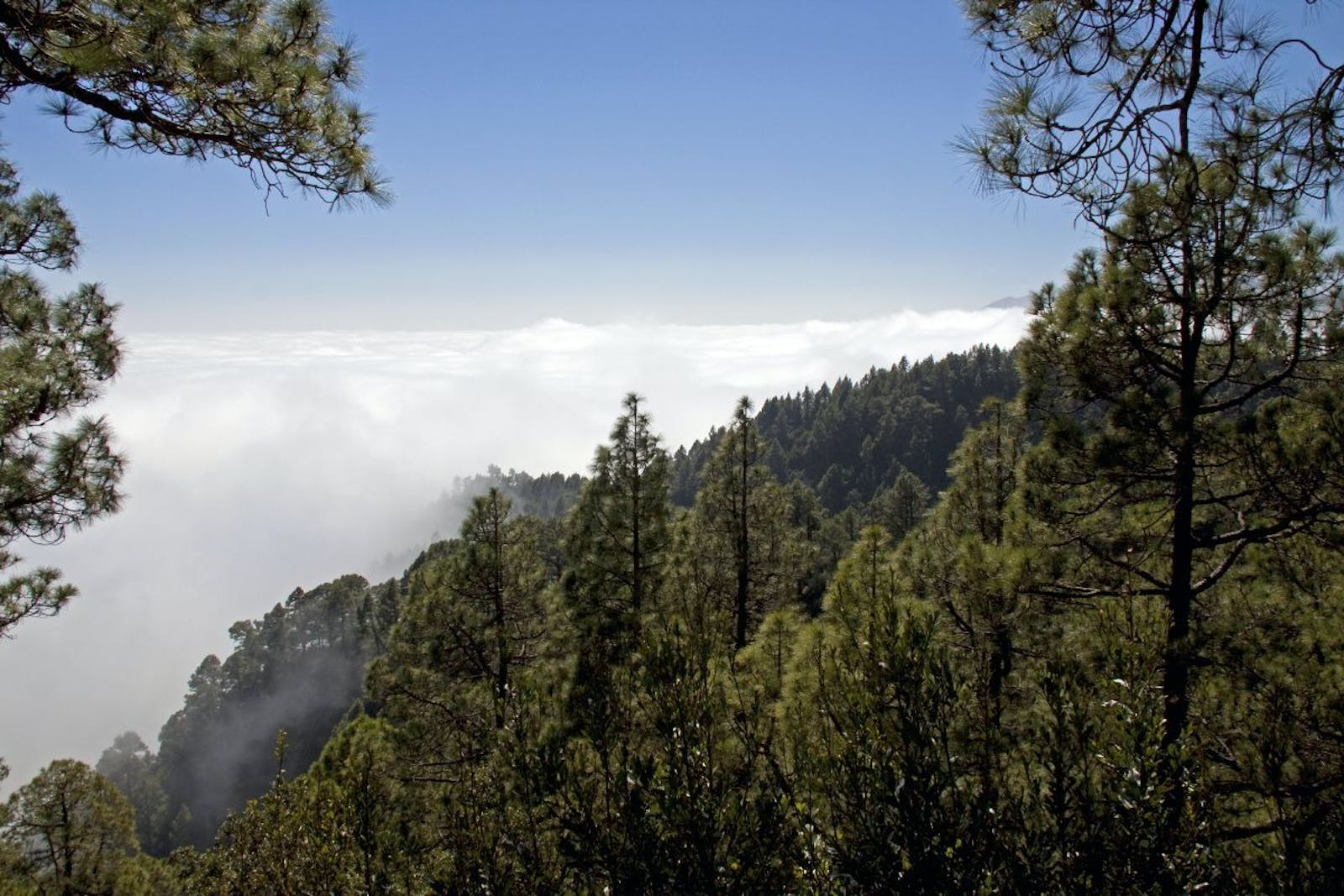 Canary Islands Dry Woodlands and Forests
