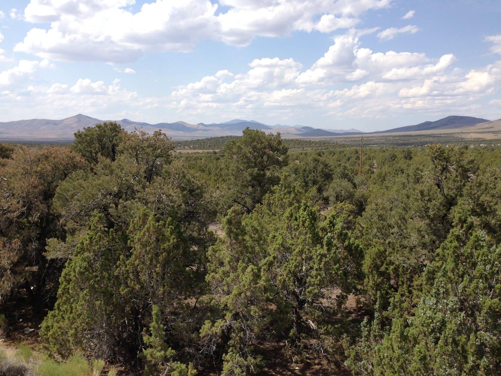 Great Basin Shrub Steppe