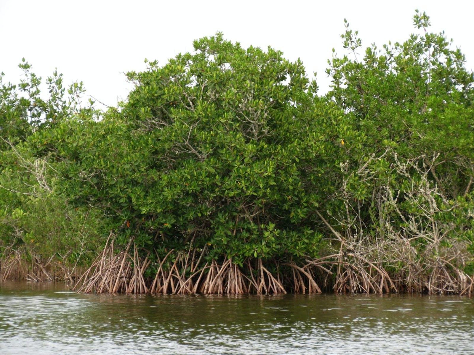 Southern Atlantic Brazilian Mangroves