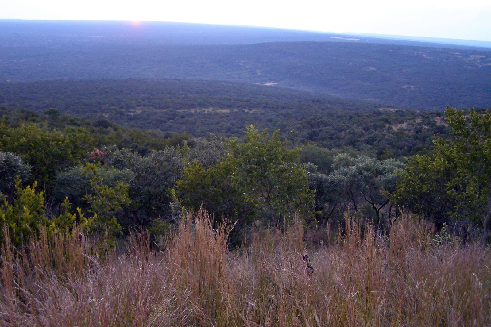 Central Bushveld