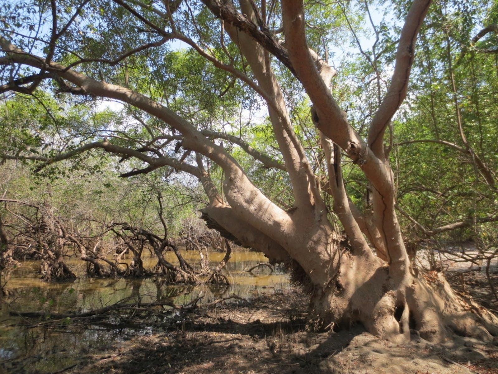 Indus River Delta-Arabian Sea Mangroves