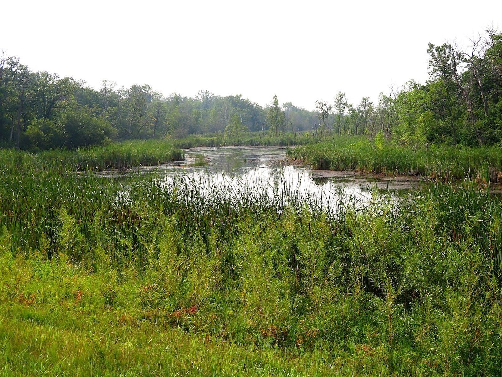 Canadian Aspen Forests and Parklands