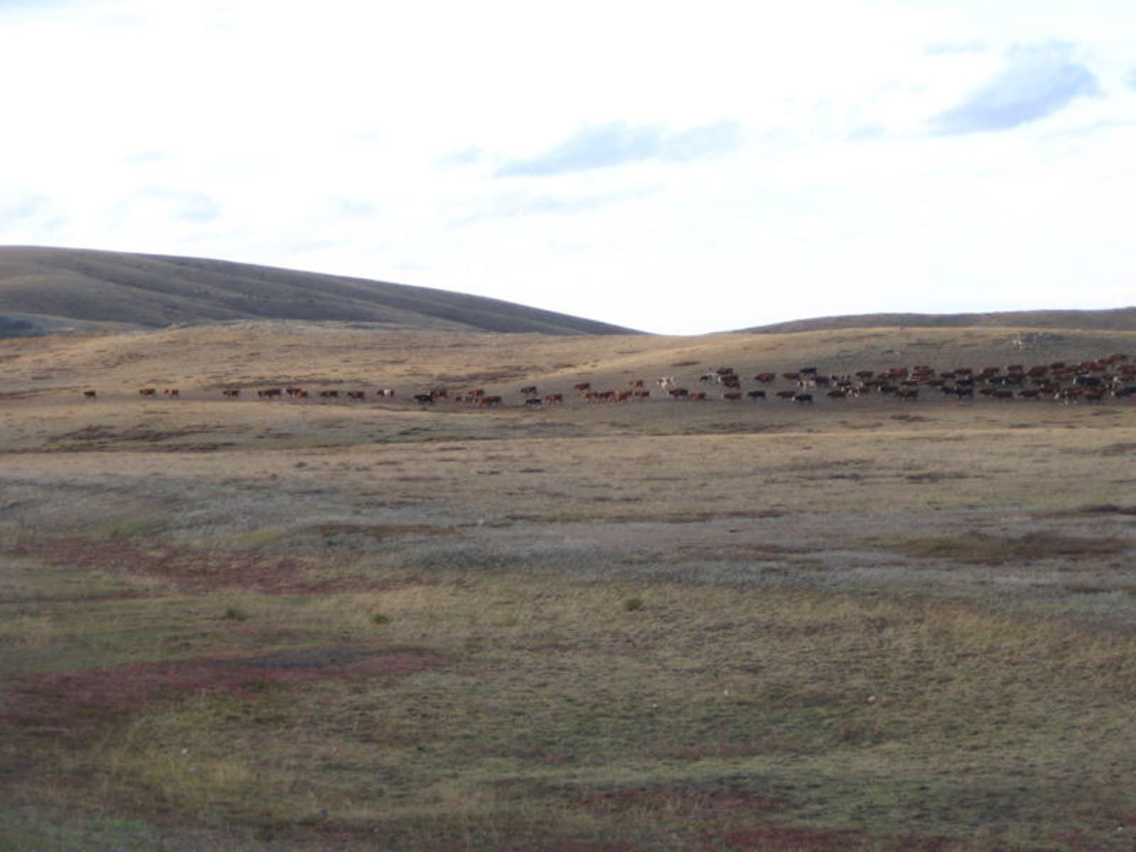 Kazakh Upland Steppe