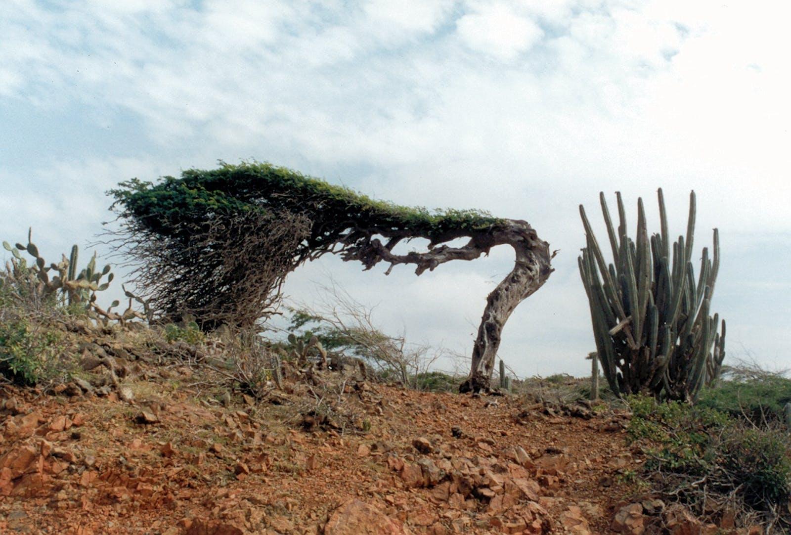 Guajira-Barranquilla Xeric Scrub