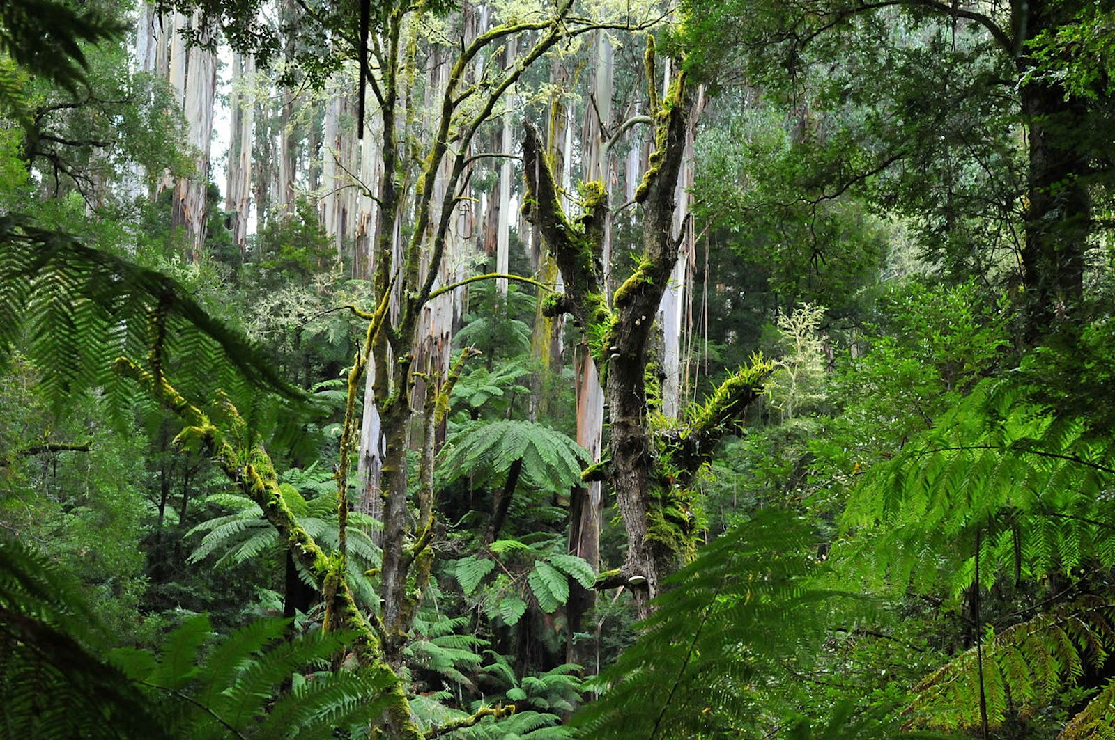 Eastern Australian Temperate Forests