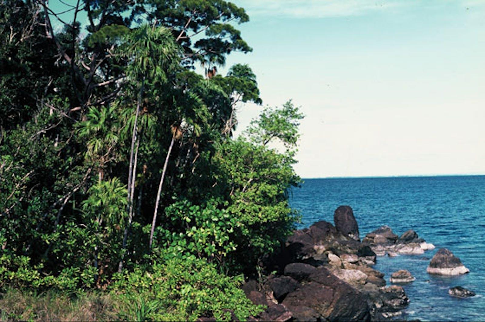Louisiade Archipelago Rainforests