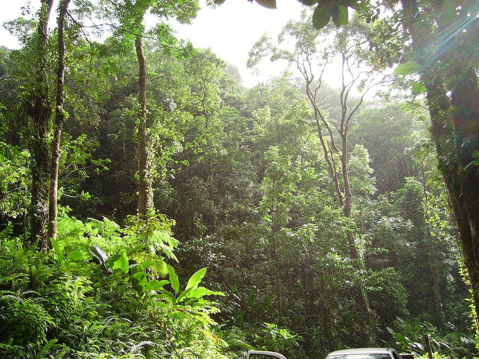 Windward Islands Moist Forests