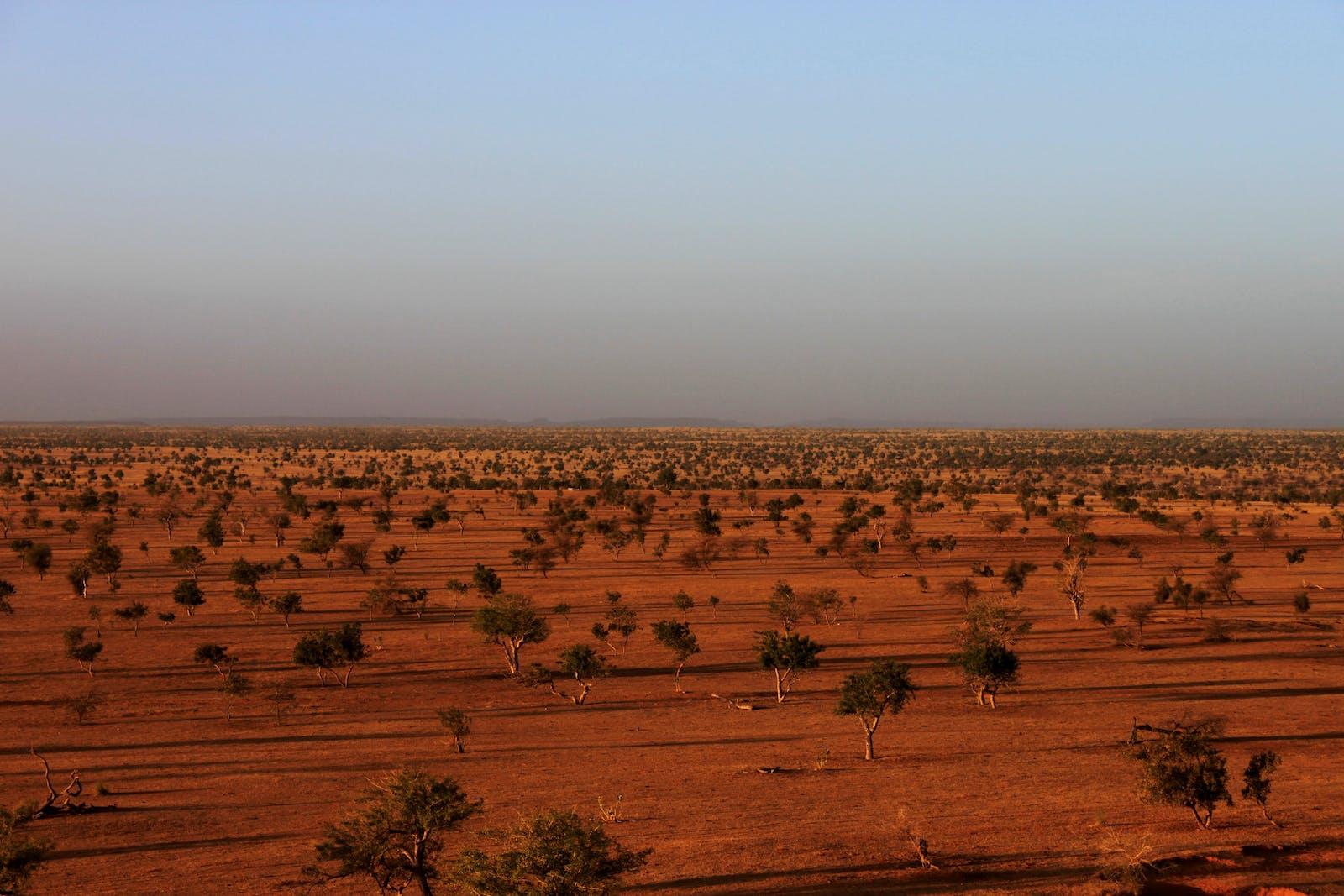 Sahelian Acacia Savanna