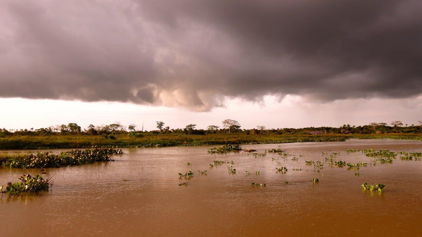 Orinoco Wetlands