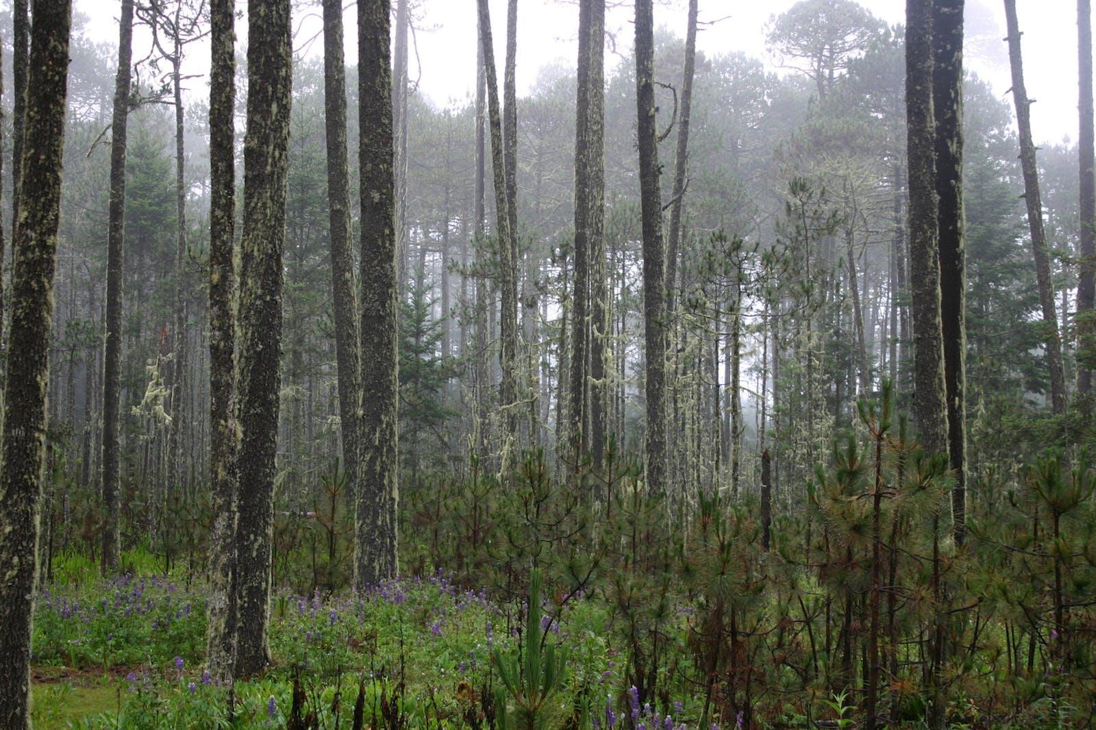 Bajío Dry Forests