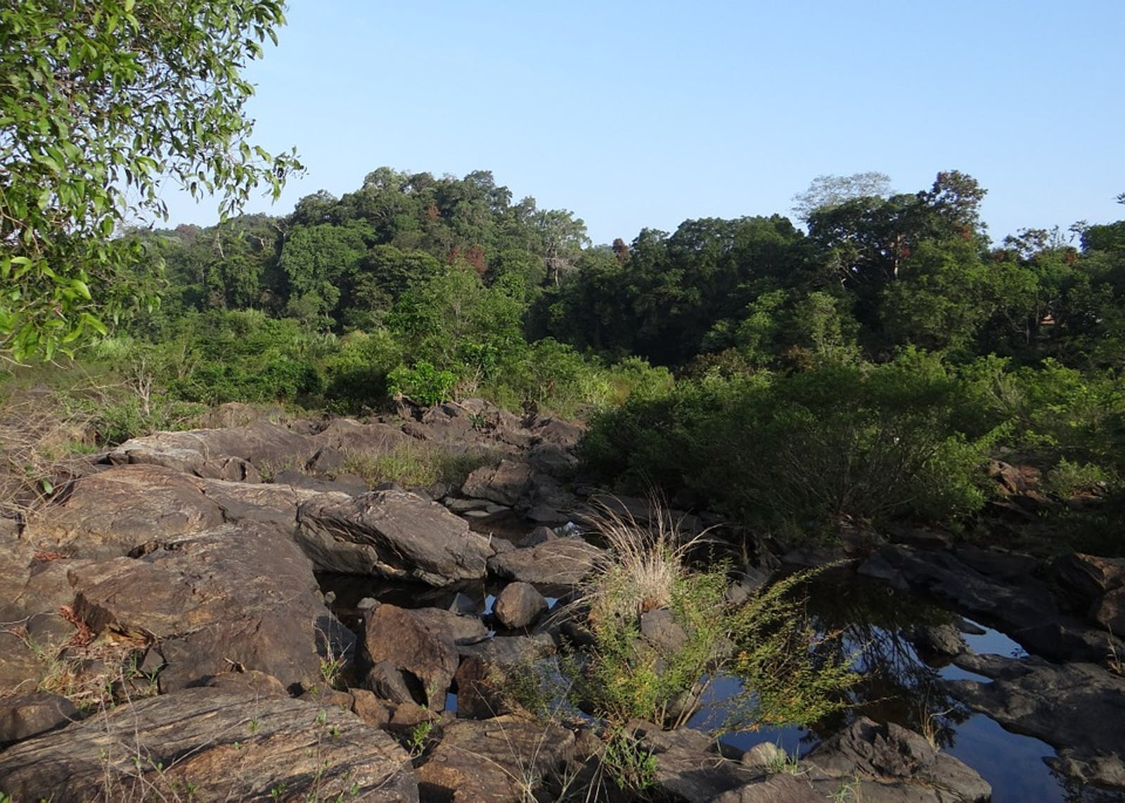 Malabar Coast Moist Forests