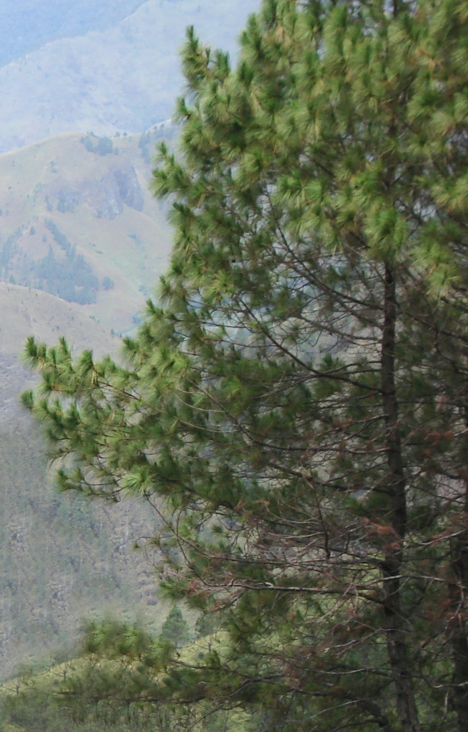 Sumatran Tropical Pine Forests