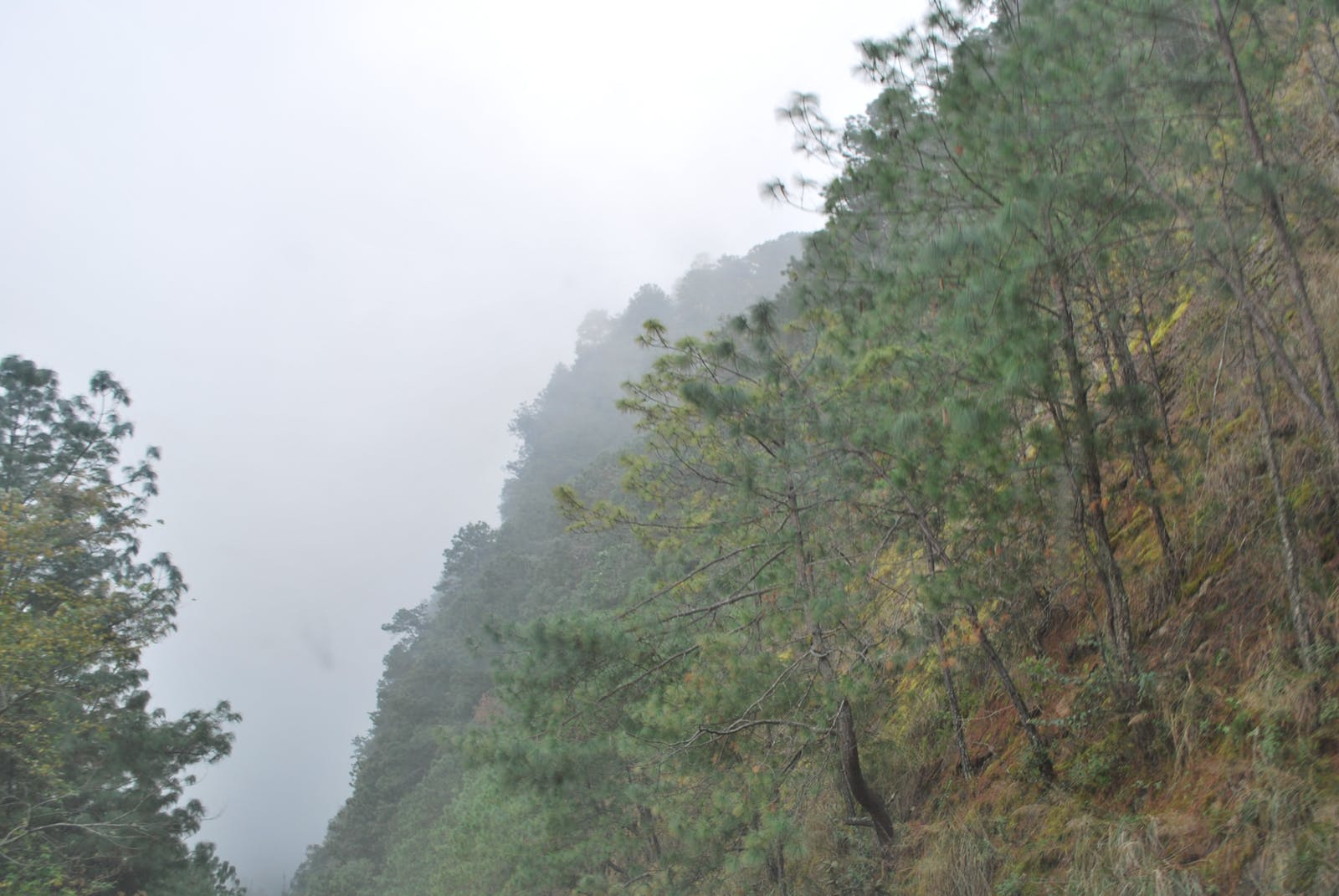 Sierra Madre Oriental Pine-Oak Forests