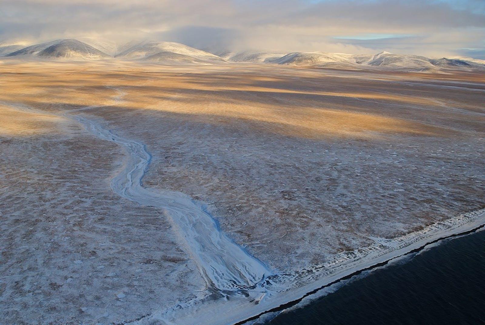 Wrangel Island Arctic Desert