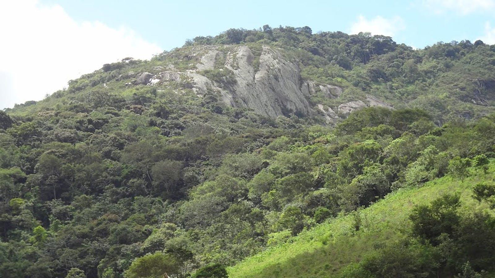 Pernambuco Interior Forests