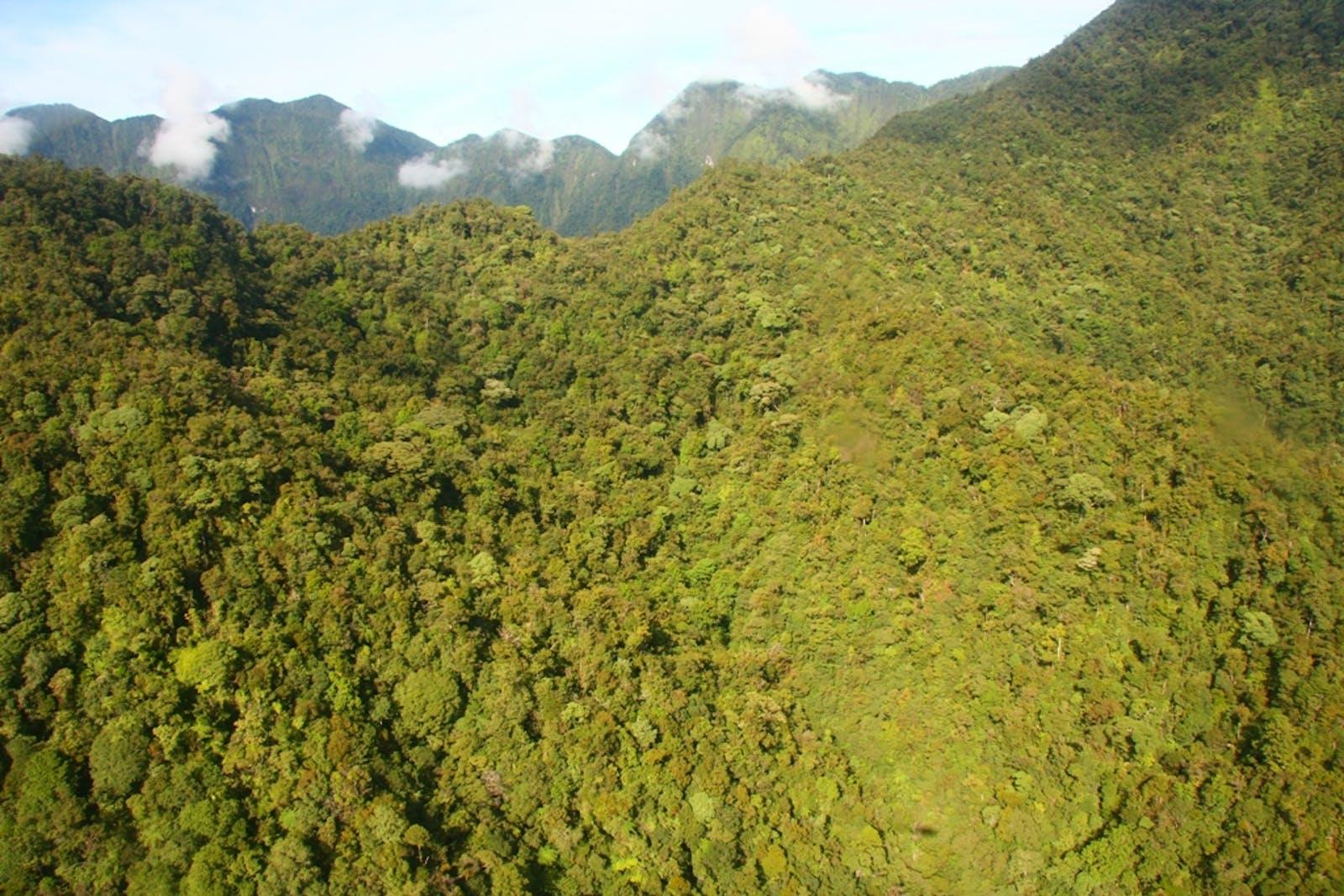 Central Range Papuan Montane Rainforests