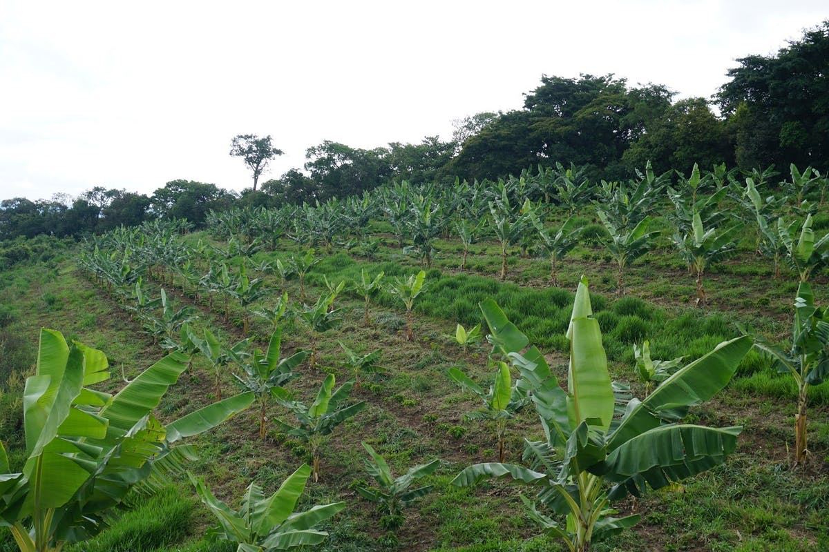 Webinar Recap: Regenerative Agriculture for a Nature-Positive Production System