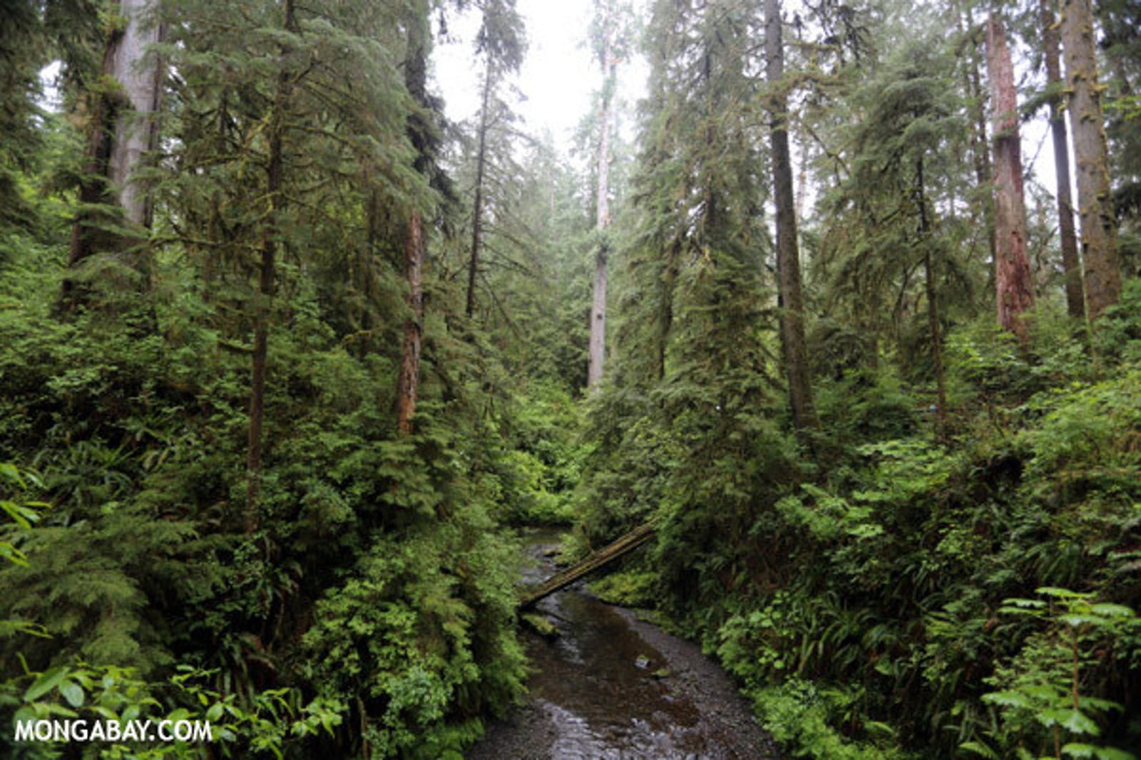 Central Pacific Northwest Coastal Forests